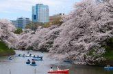 V prvním japonském kryptoměnovém investičním fondu bude mít největší zastoupení XRP