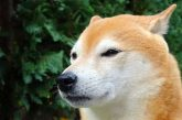 Kryptoměnu Dogecoin táhne nahoru TikTok pumpa